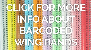 2d barcoded wing bands