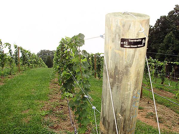 vineyard tags