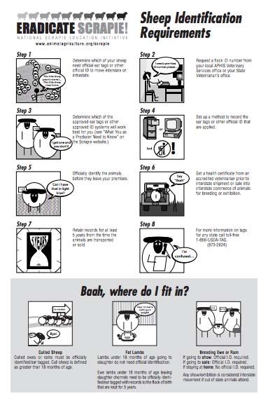 scrapie info sheet