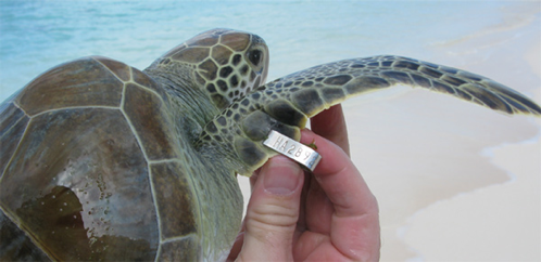 sea turtle tag 6