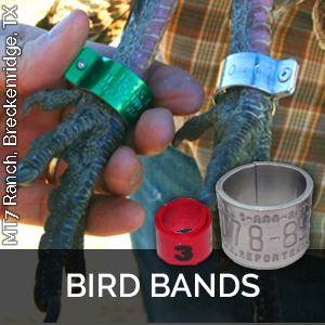 butt end bands bird leg bands