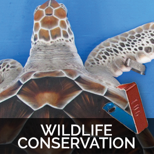 wildlife conservation tags