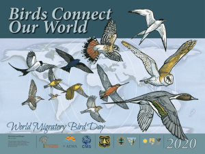 World Migratory Bird Day Poster