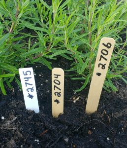 wood plant labels and wood plant stakes