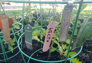 Plant labels in plastic, copper, and aluminum with copper wire for attachment